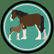 horse terms icon