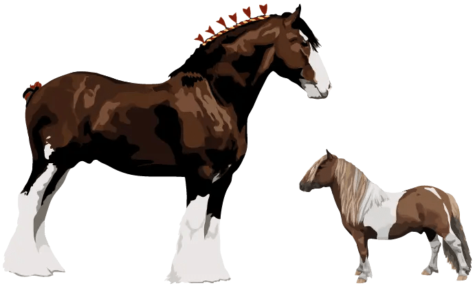 horse Feed Size