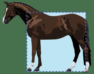 Level horse conformation