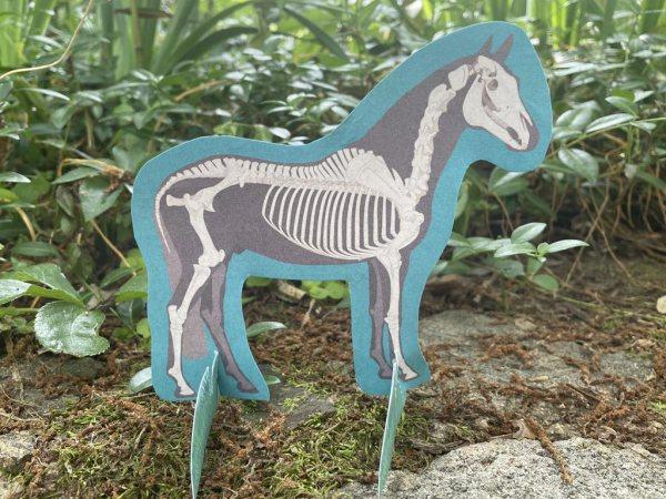 Horse skeleton illustrated download
