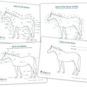 Parts of Horse Activity