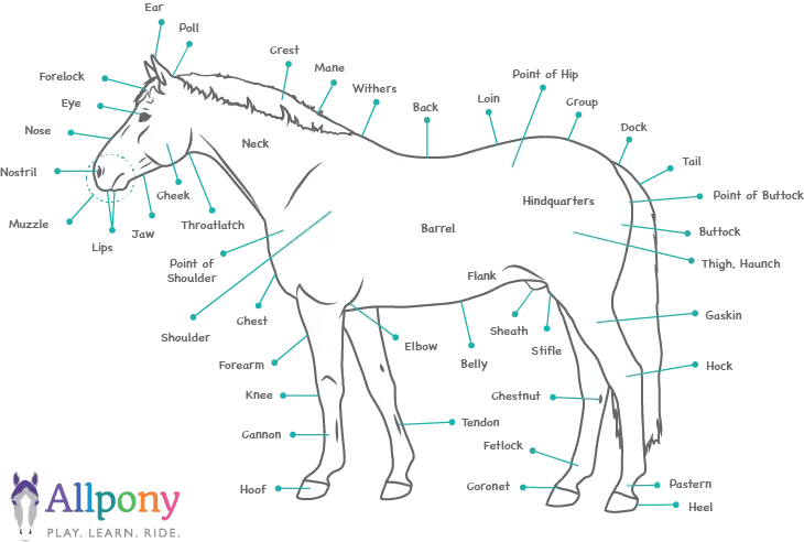 Parts of horse illustration vector