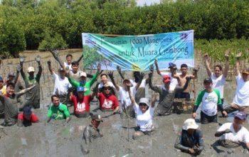 tanam-mangrove2