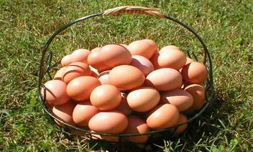Eggs Contain Stored Food In The