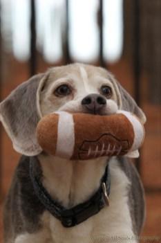 Blu (Beagle)