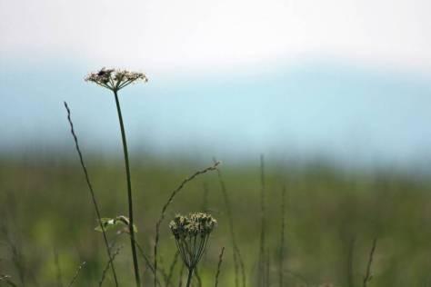 Sommerwiese mit Fliege