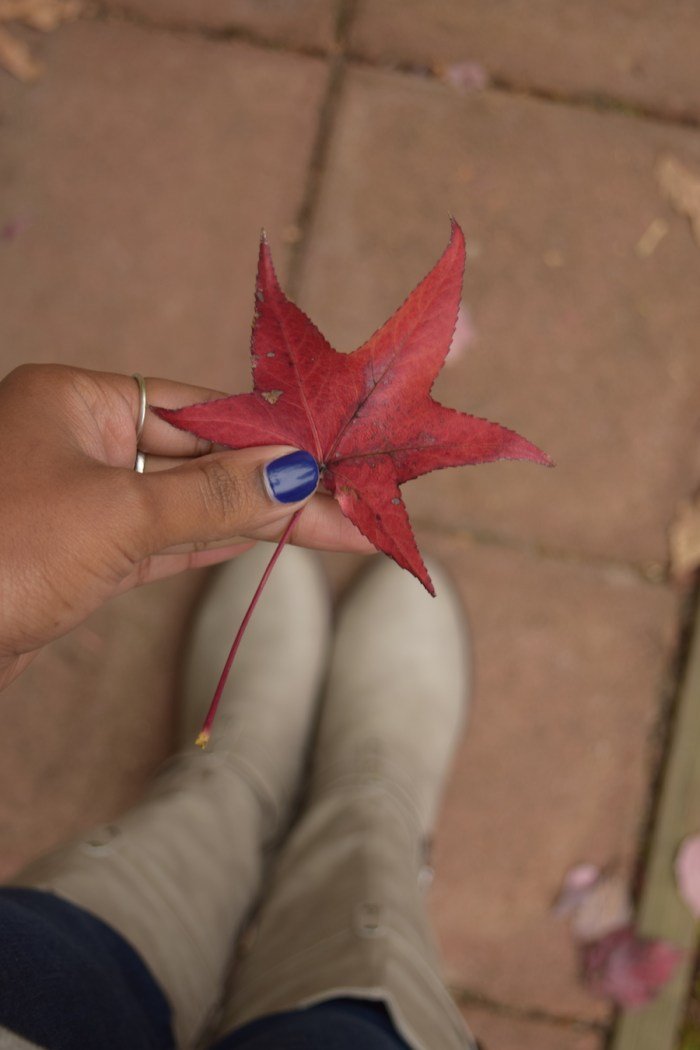 perfect-fall-leaf-annapolis-md