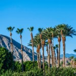 Palm Springs LGBT Vacation Guide