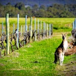 The Most Beautiful Vineyards and Wineries in Australia