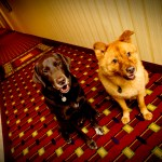 Best Pet-Friendly Hotels in Fort Lauderdale