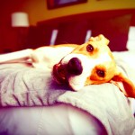 6 Best Pet-Friendly Hotels in Florida