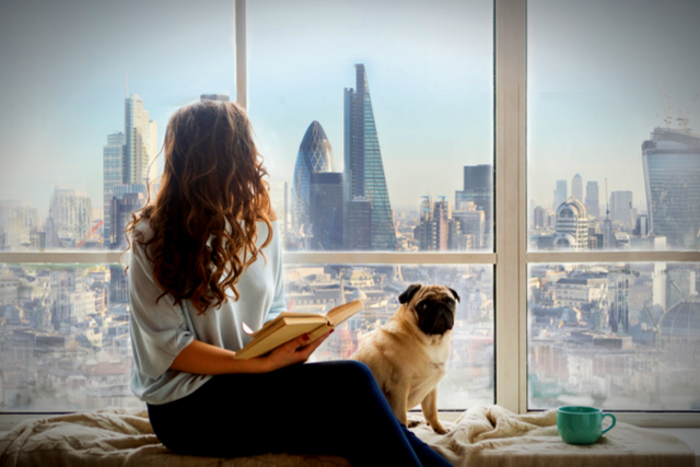 Airbnb London Best Areas For Pet Friendly Accommodation The
