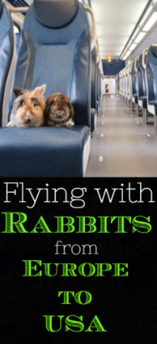 flying with rabbits from europe to usa
