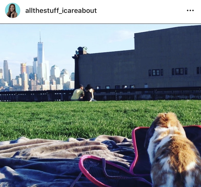 traveling with rabbits to nyc usa