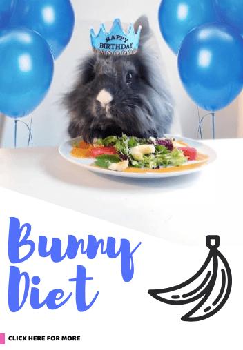 bunny diet what rabbit eat