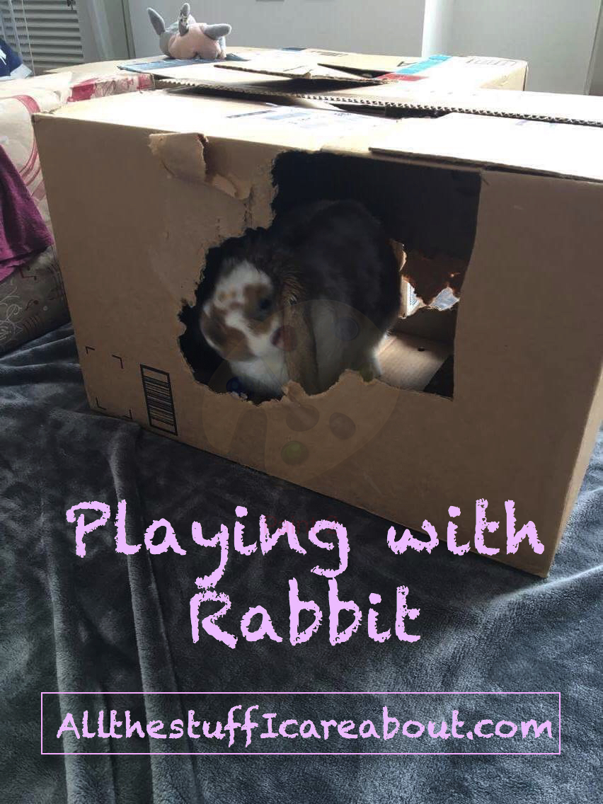 playing_with_your_rabbit