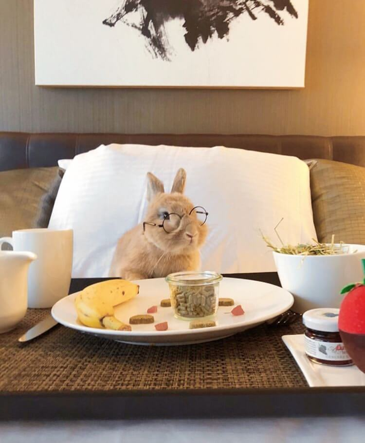what rabbit eat