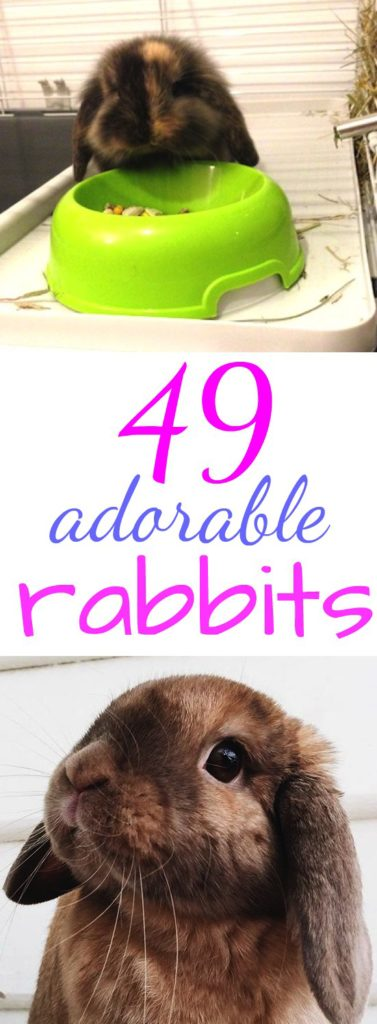 49 adorable rabbits