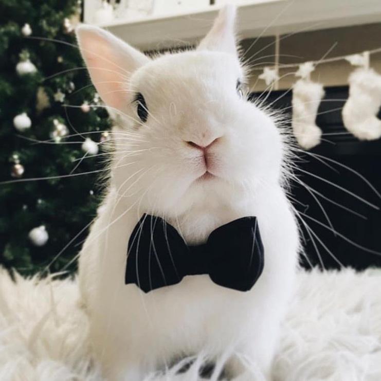 49 bunnies