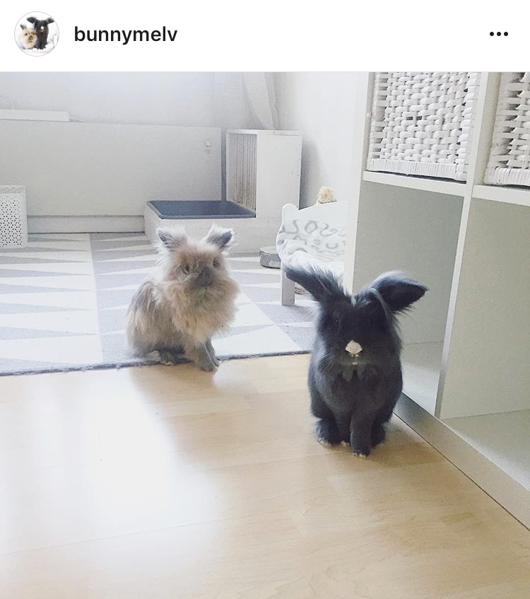 2a bunnymelv allthestufficareabout