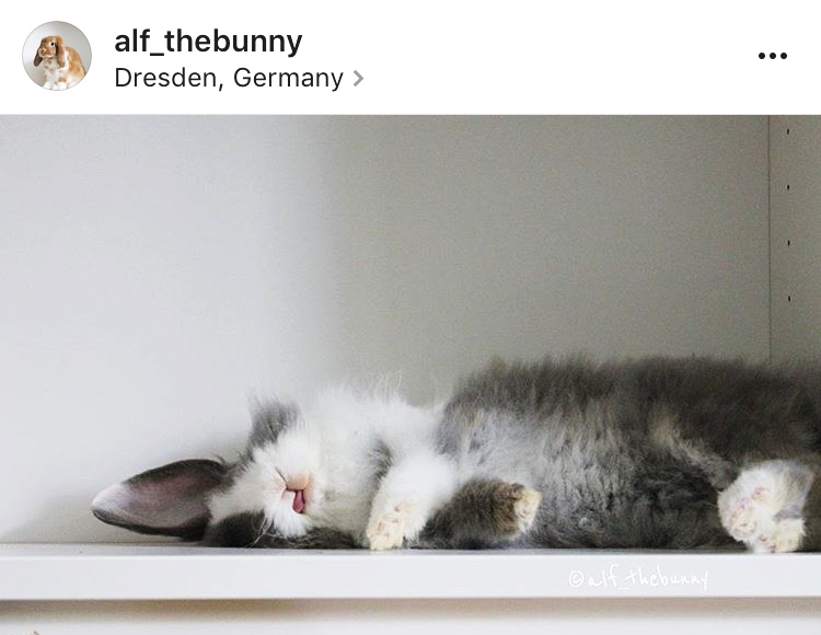6 alf thebunny allthestufficareabout
