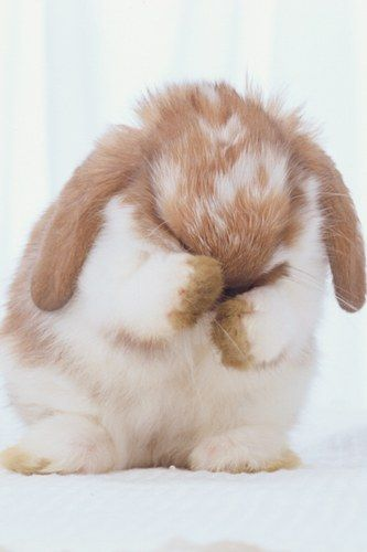 bunny cleaning