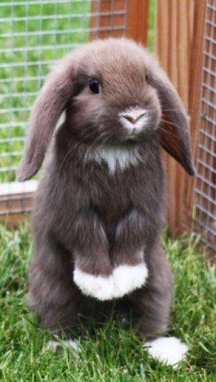 bunny attention