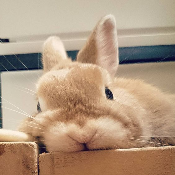 bunny interested eye contact