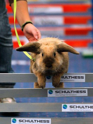bunny marathon