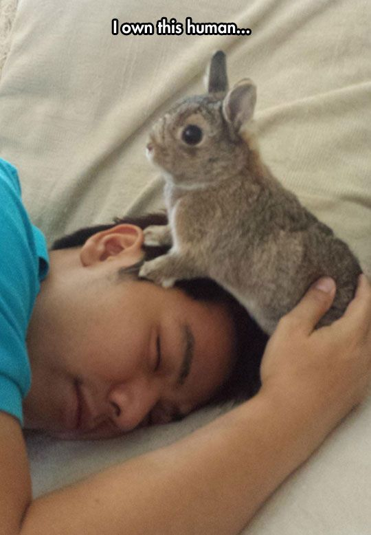 bunny ownes you rabbit with a boy