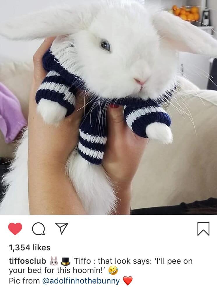 funny bunny pose caption