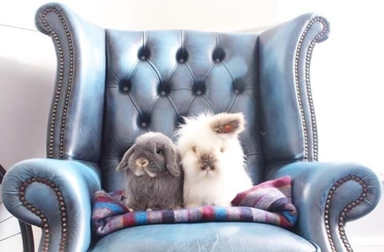 funny bunny pose sitting