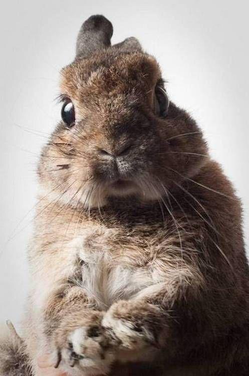 serious bunny rabbit