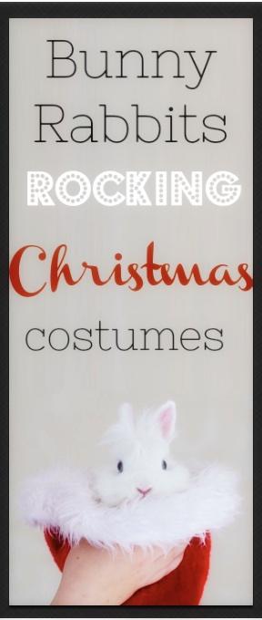 Bunny-rabbits-rocking-christmas-costumes