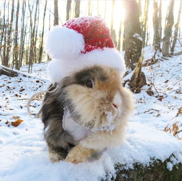 Bunny Rabbits rocking Christmas costumes