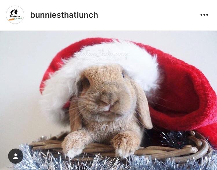 christmas_rabbit_santa_bunny_in