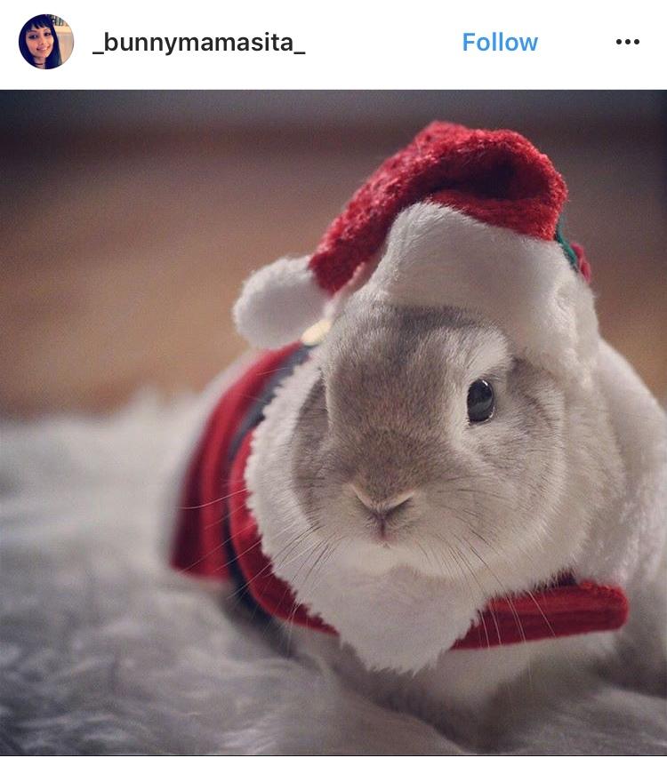 Weihnachtsbunny