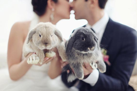 Bunny wedding theme