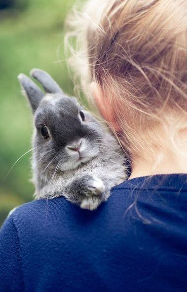 kids and bunnies serious