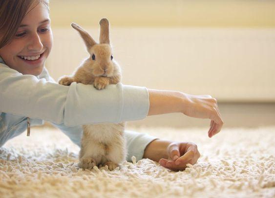 kids bunnies funny