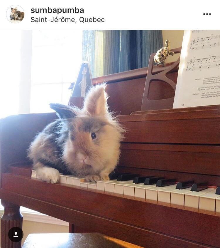 living with a bunny entertainment piano
