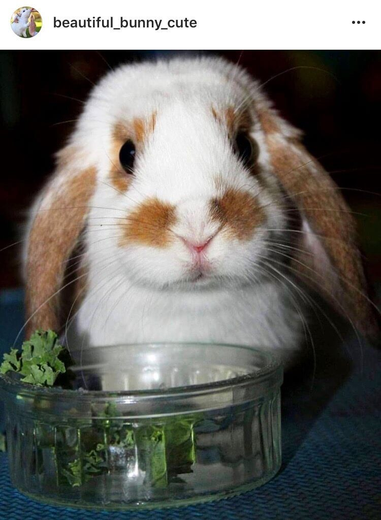 salad and kale are always a good idea bunny
