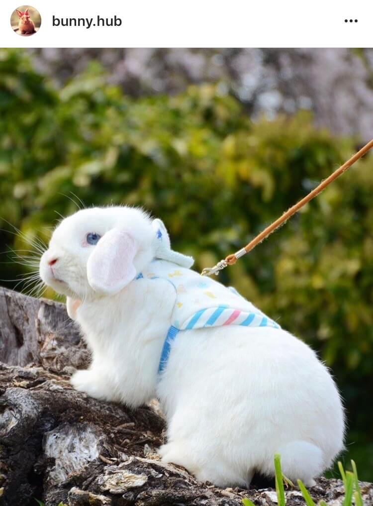 living with a bunny outdoors