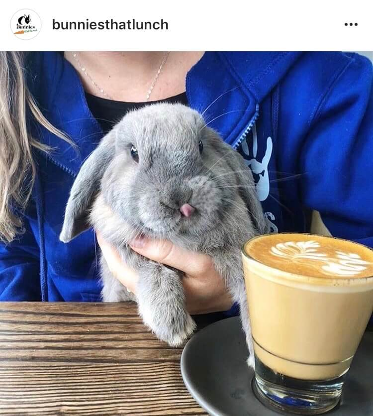 living with a bunny caffee