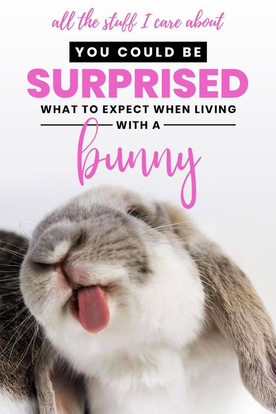 what to expect when living with a bunny