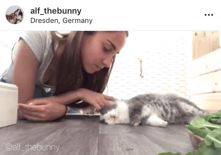 bunny mum bunny mama bunny mummy allthestufficareabout alf_thebunny