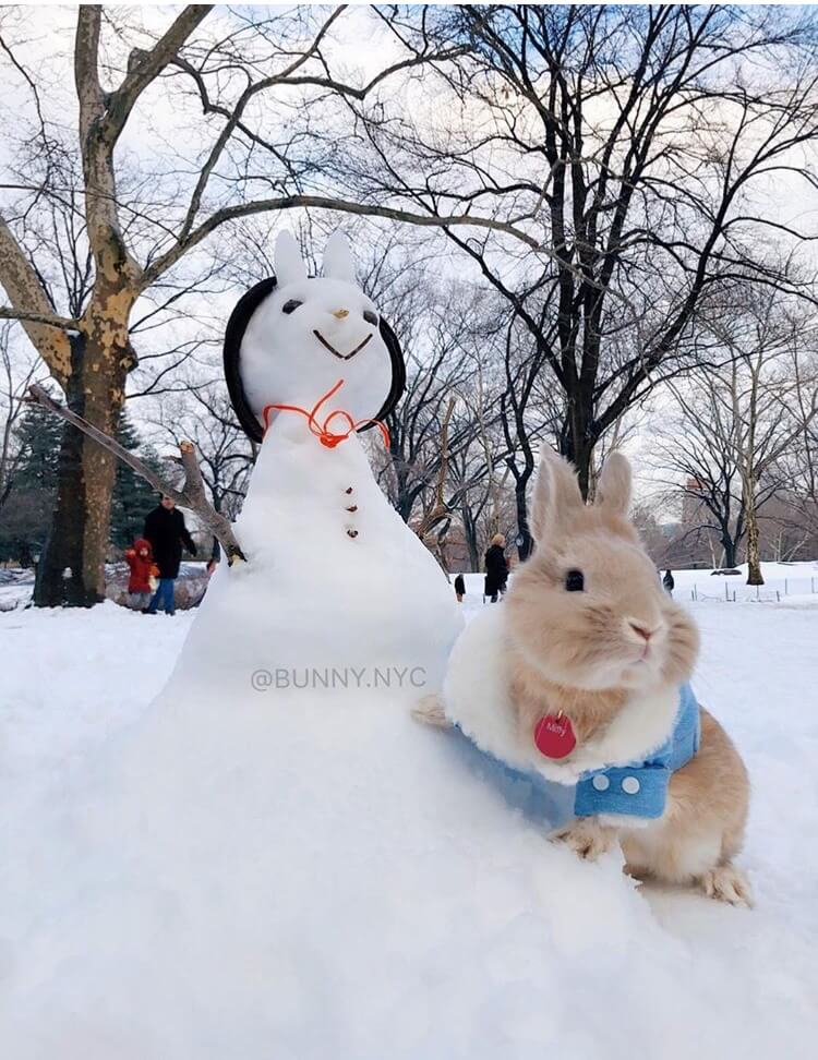 funny bunny winter photoshoot