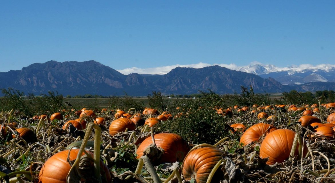 pumpkin patches near boulder