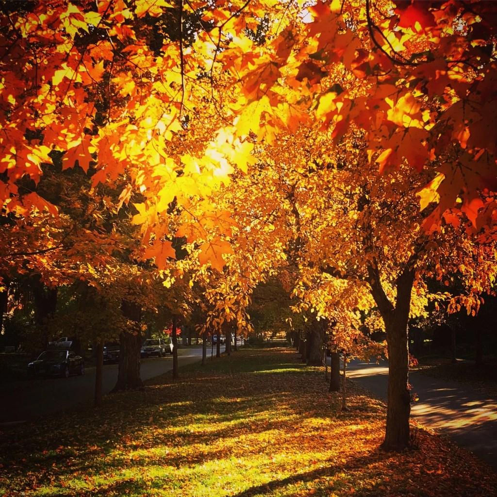 Boulder fall festivals
