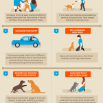 Puppy Training Tips 45 Dog Experts Share Their Secrets All Things Dogs All Things Dogs